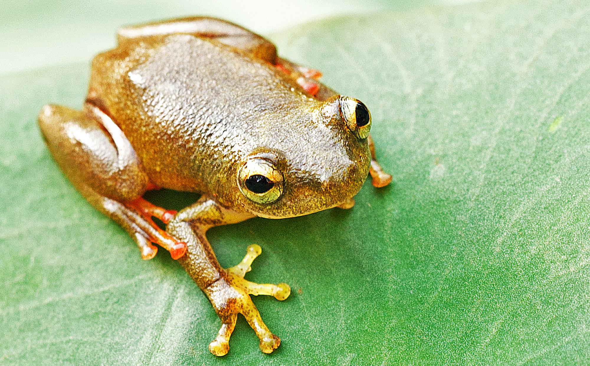 biodiversité amphibien environnement